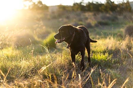 urban hike dog adventure with the joyful pooch