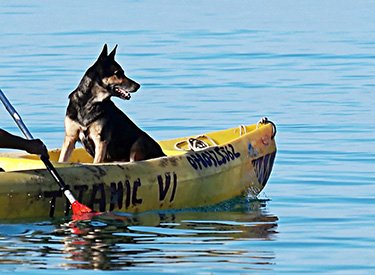 dog-in-kayak